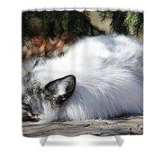 Arctic Fox Shower Curtain