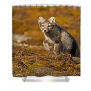 Arctic Fox Striding Out Shower Curtain