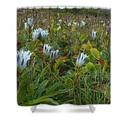 Arctic Gentian Blooming In The Alpine Shower Curtain