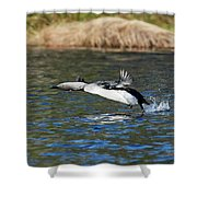 Arctic Loon Take Off Shower Curtain