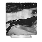 Arctic: Ringed Seal Shower Curtain