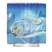 Arctic Seal Shower Curtain