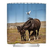 Arctic Tern Attacking Mare Shower Curtain