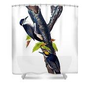 Arctic Three-toed Woodpecker Audubon Birds Of America 1st Edition 1840 Octavo Plate 268 Shower Curtain