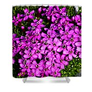 Arctic Wild Flowers Shower Curtain