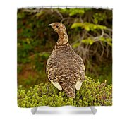 Arctic Willow Ptarmigan Shower Curtain