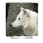 Arctic Wolf - On Watch Shower Curtain