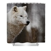 Arctic Wolf Pictures 1242 Shower Curtain
