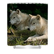 Arctic Wolf Pictures 1268 Shower Curtain