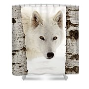 Arctic Wolf Seen Between Two Trees In Winter Shower Curtain