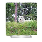 Arctive Wolf Lying Down Shower Curtain