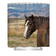 Are You Coming? Shower Curtain by Nicole Markmann Nelson