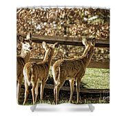 Are You Looking At Us Shower Curtain