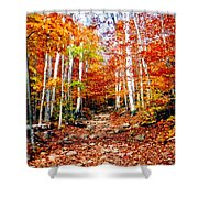 Arethusa Falls Trail Shower Curtain by Greg Fortier