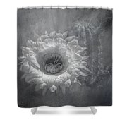 Argentine Giant Painted Bw Shower Curtain