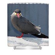 Arica Chile Sea Bird Shower Curtain