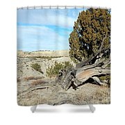 Arid Beauty Shower Curtain