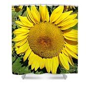 Arikara Sunflower Shower Curtain