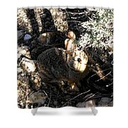 Arizona 13 Shower Curtain