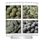 Arizona Cacti  Shower Curtain