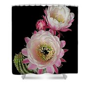 Arizona Desert Cactus Flowers Shower Curtain