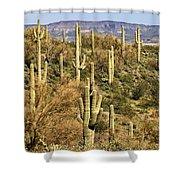 Arizona Desert Shower Curtain