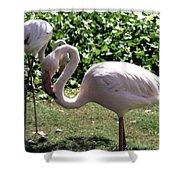 Arizona Flamingos Shower Curtain