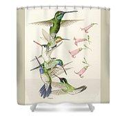 Arizona Hummingbirds Shower Curtain