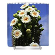 Arizona State Flower- The Saguaro Cactus Flower Shower Curtain