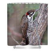 Arizona Woodpecker Shower Curtain