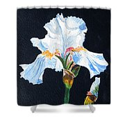 Arlene's Iris Shower Curtain