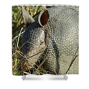 Armadillo By Morning Shower Curtain
