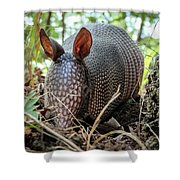 Armadillo In The Woods Shower Curtain