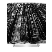 Armstrong National Park Redwoods Filtered Sun Black And White Shower Curtain