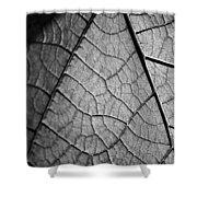 Aroid House Leaf Shower Curtain