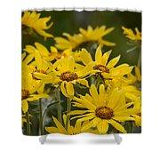 Arrowleaf Balsamroot Bouquet Shower Curtain