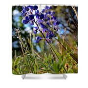 Arroyo Lupine Four Shower Curtain