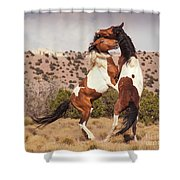 Art Of The Fight Shower Curtain