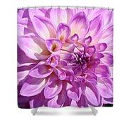 Art Prints Dahlia Flower Decorative Art Garden Baslee Shower Curtain