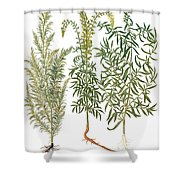 Artemisiae & Reseda Shower Curtain