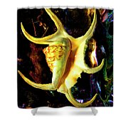 Arthritic Spider Conch Seashell Shower Curtain