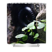Arthropoda Shower Curtain