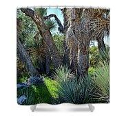 Arthur B Ripley Desert Woodland State Park Shower Curtain