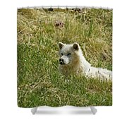 Artic Wolf 2 Dry Brushed Shower Curtain