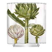 Artichoke, 1613 Shower Curtain