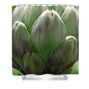 Artichoke In Spain Shower Curtain