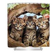 Three Cats Shower Curtain
