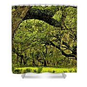 Artistic Live Oaks Shower Curtain