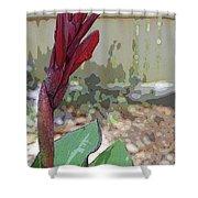Artistic Red Canna Lily Shower Curtain