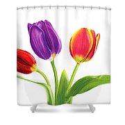 Tulip Trio Shower Curtain